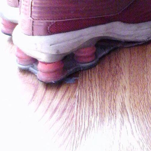 Pivotal Ideas Wolfzuachis Sport Shoes Style Sporty Pink Red @wolfzuachis Showcase: 2016 Color Of Life Eyeem Market Showcase: August EyeEm 2016 Shoes Foot Wear