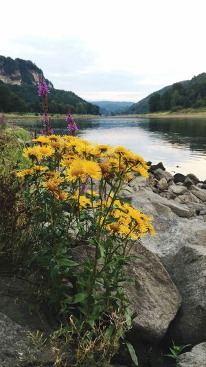 Plant Beauty In Nature Water Sky Flower Flowering Plant Nature Tranquility Growth Day Scenics - Nature Mountain Non-urban Scene Incidental People Tranquil Scene Freshness Land Fragility Outdoors