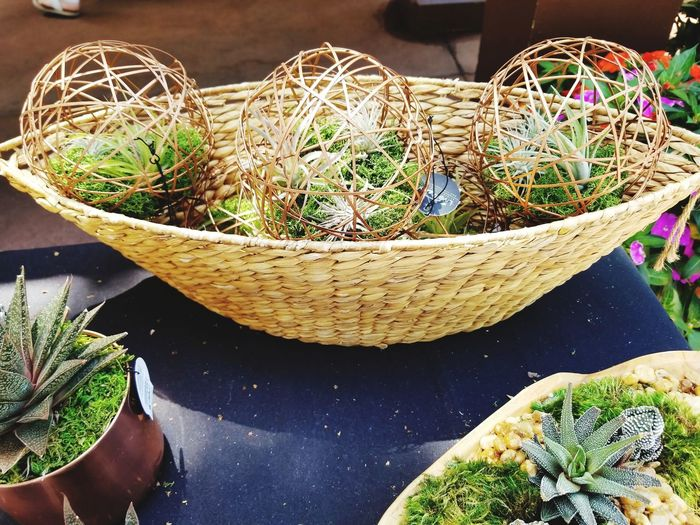 High angle view of potted plants in basket