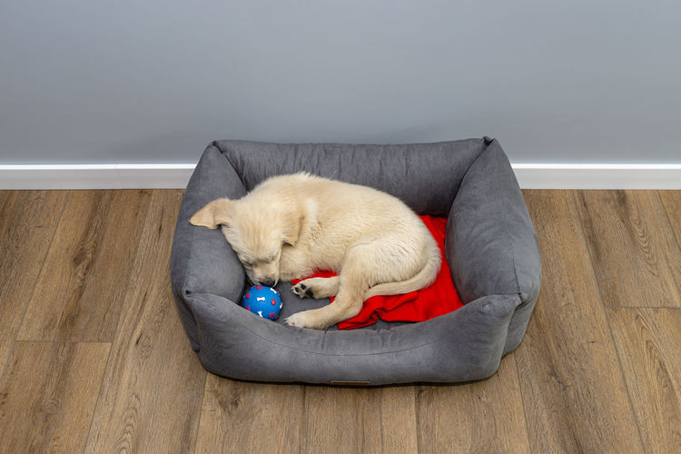 High angle view of a dog on floor
