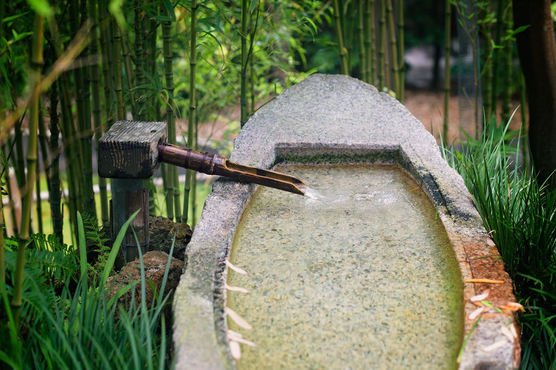 Close-up of bamboo water