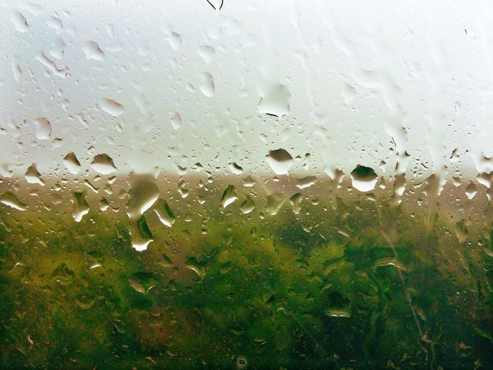 Water Droplets Rain Rain Drops Forest