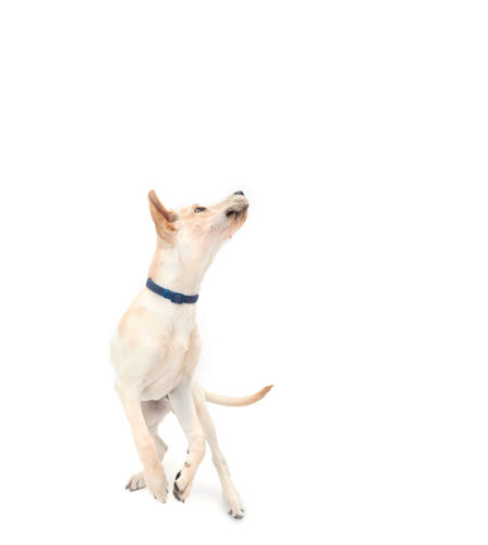 Portrait of a dog over white background