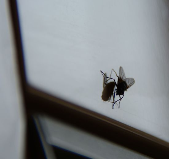 Fly On The Wall waiting to be Handled Eye4photography  Check This Out Animal Photography Eyem Best Shots