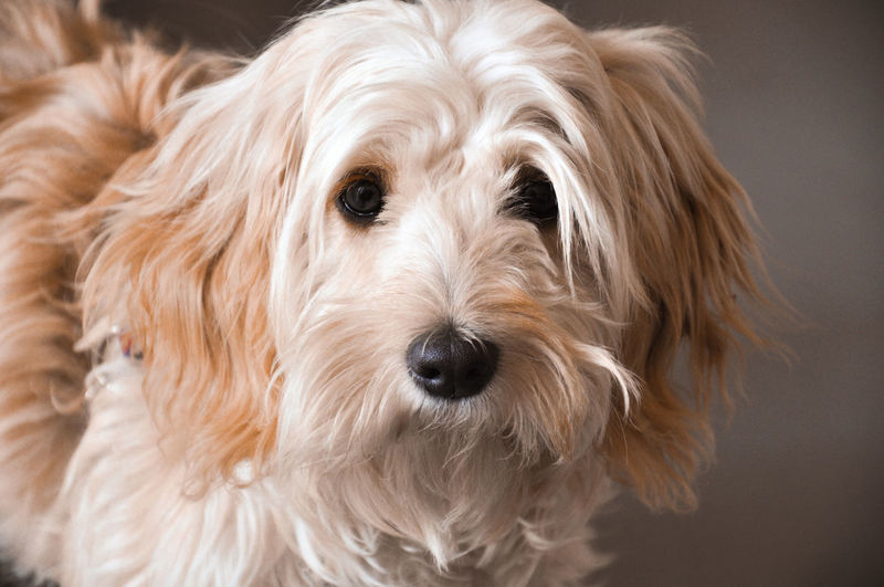 Dog love Animal Hair Animal Themes Close-up Day Dog Domestic Animals Focus On Foreground Indoors  Looking At Camera One Animal Pets Portrait