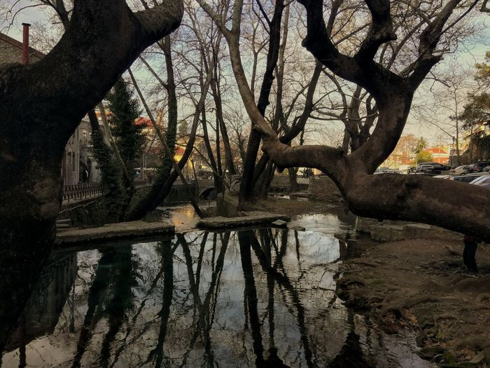 Reflection Reflections Tree Trees Trees And Sky Branch Day Tree Trunk Beauty In Nature No People Close-up