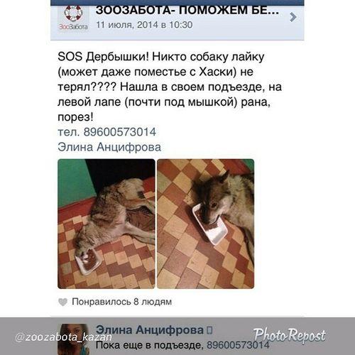 "By @zoozabota_kazan ""Нашлисобаку дербышки лайка нашласьсобака потеряласьсобака ктоищет ктознает казань"" via @PhotoRepost_app"
