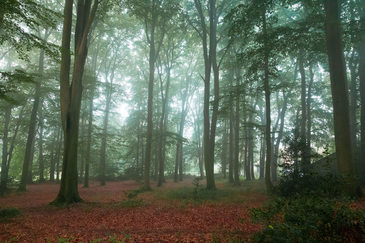 Foggy forest Forest Tree Tree Trunk Trunk Plant WoodLand Tranquility Beauty In Nature Nature Tranquil Scene Day Scenics - Nature No People Outdoors FogyDay Porta Westfalica Autumn Autumn colors Autumn Leaves Herbs Nebel Wald Foggy Landschaft
