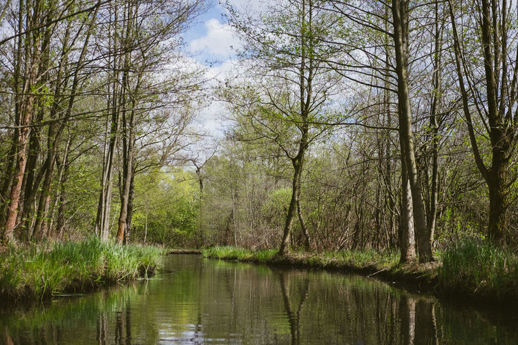 Beauty In Nature Canal Day Flood Forest Germany Grass Lake Landscape Nature No People Non-urban Scene Outdoors Reflection Scenics Sky Spreewald Tranquil Scene Tranquility Tree Vegetation Water Wilderness