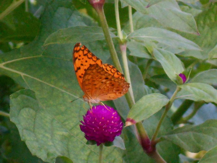 Beauty In Nature Butterfly And Flowers Close-up Flower Flower Head Freshness Green Color Leaf No People Plant