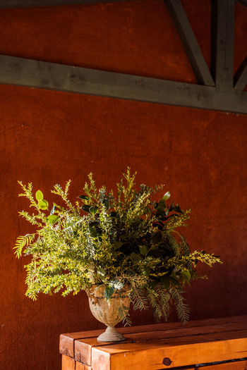 Close-up of potted plant against wall