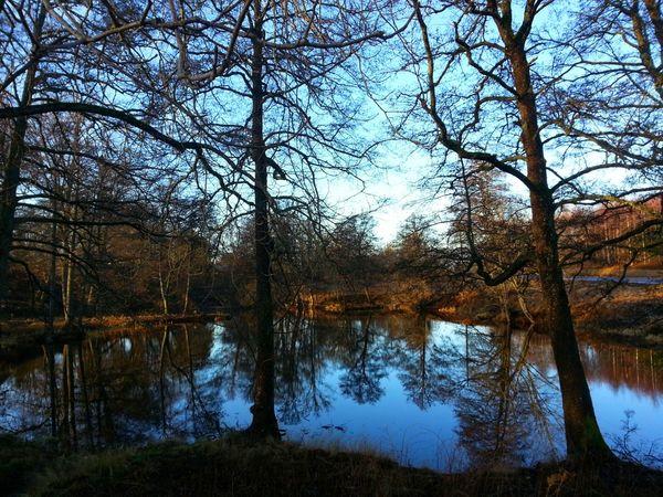 Lake View Tree Landscape