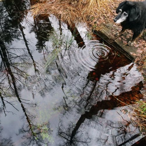Dog Drinking Water Reflection Animals Nature Bird Tree Textured  Close-up Standing Water Lake Pond Canine
