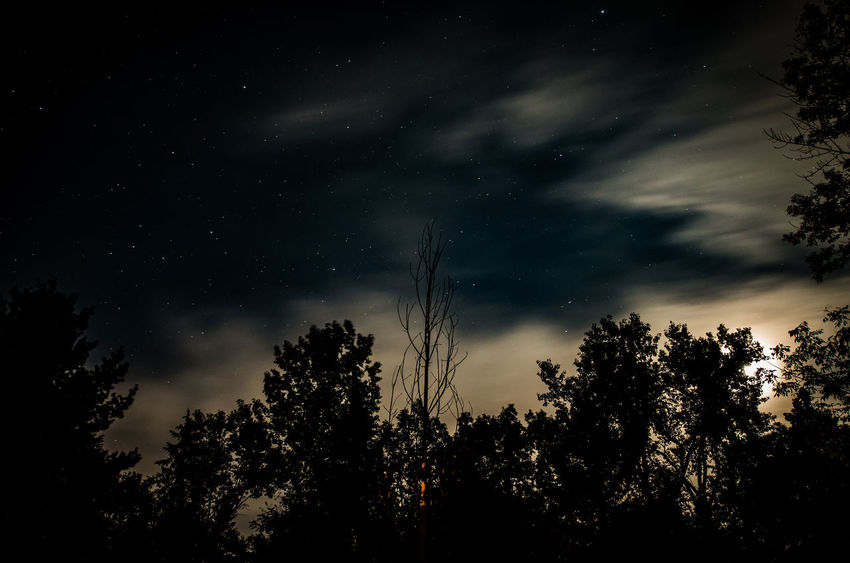 Astronomy Beauty In Nature Galaxy Growth Low Angle View Nature Night No People Outdoors Scenics Silhouette Sky Space Star - Space Starry Tranquil Scene Tranquility Tree
