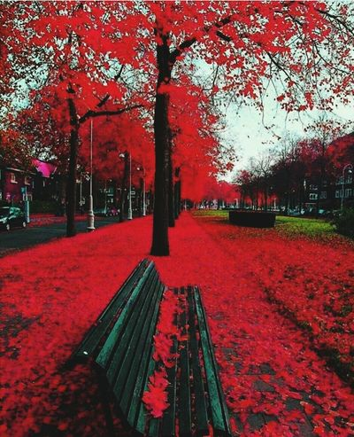 Tree Red Outdoors Day No People Beauty In Nature Nature
