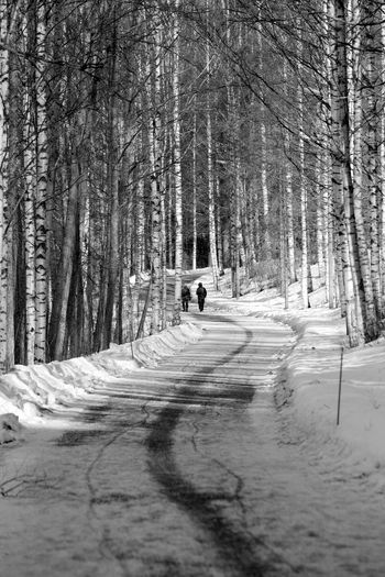 Tree Forest Plant Land Direction Snow The Way Forward Nature Winter Cold Temperature WoodLand Road Day Tranquility Transportation Trunk Bare Tree Covering Tree Trunk Diminishing Perspective Outdoors Lonely Trip