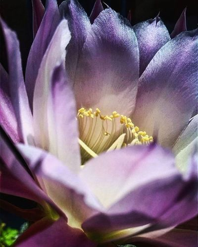 Igerflores Petalos Flores Naturalezamexico Ig_flowers Photographeramateur Phantogramex Talentomex Fotomastermx Flowers Cameramex Flowerstagram Walls_pcmx Instantefloral
