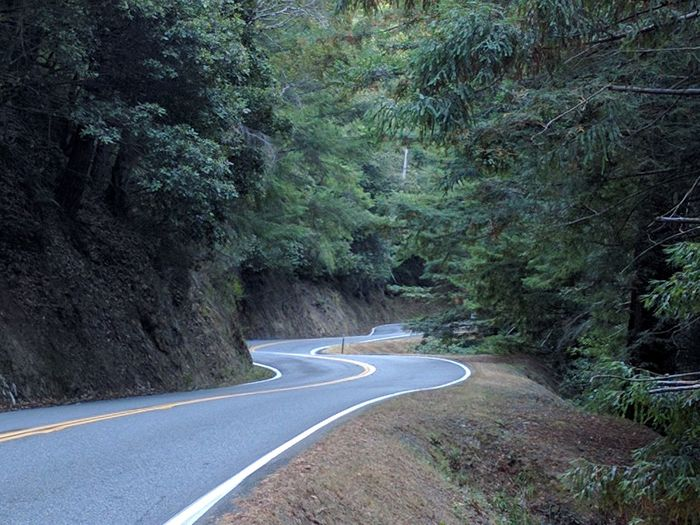 California Country Road Curve Empty Road Green Color Long Nature Non-urban Scene Pine Trees Redwood Road Solitude The 1 Tourism Transportation Travel Destinations Tree Twists And Turns