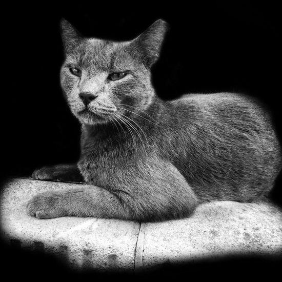 Neighborhood watch Cat Catstagram Cats