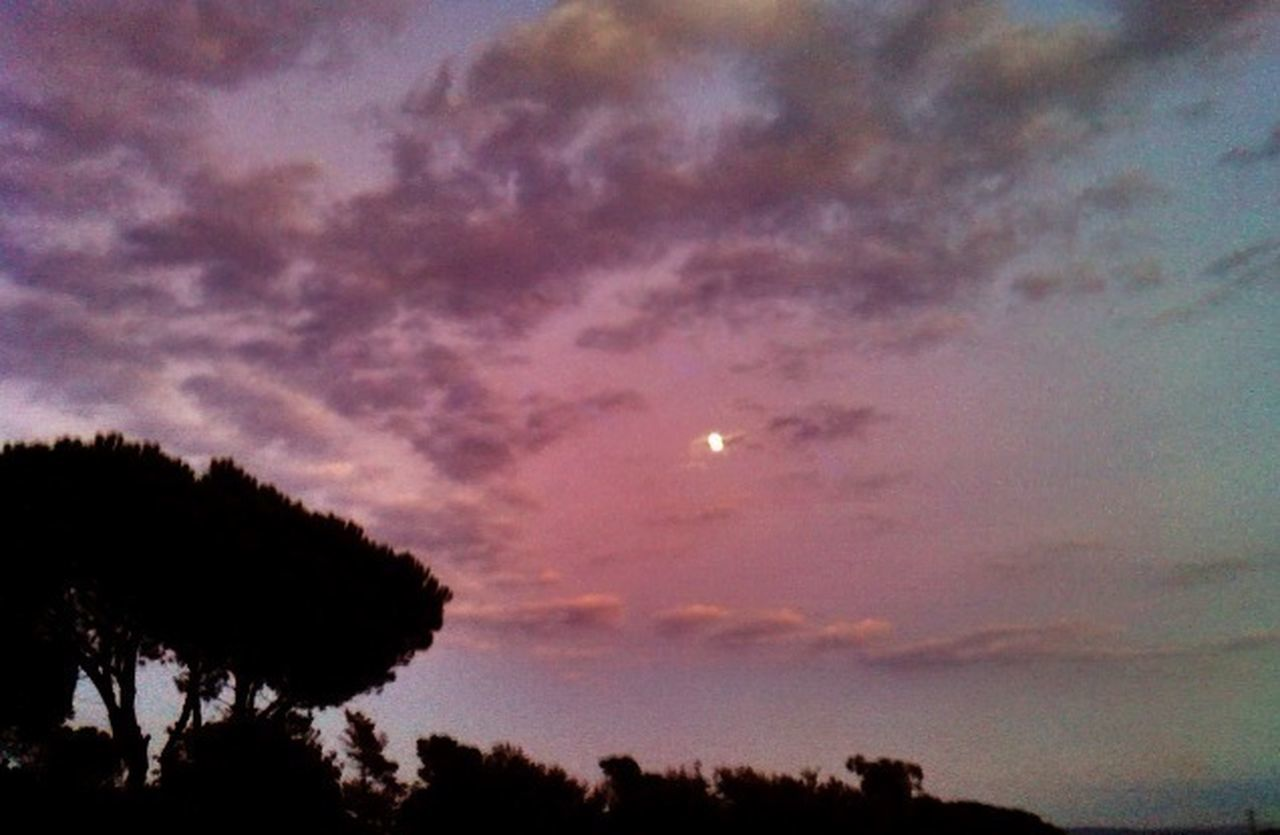moon, beauty in nature, nature, sky, scenics, tree, silhouette, sunset, tranquil scene, tranquility, no people, night, low angle view, outdoors, astronomy, half moon