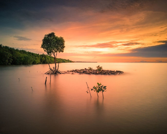 EyeEm Selects Sunset Water Reflection Tree Landscape Tranquility Sea Sky Outdoors Tranquil Scene Tropical Climate Cloud - Sky Horizon Over Water Summer No People Nature Beauty In Nature Silhouette Scenics Backgrounds See The Light EyeEmNewHere Dramatic Sky Southsulawesi Be. Ready. AI Now