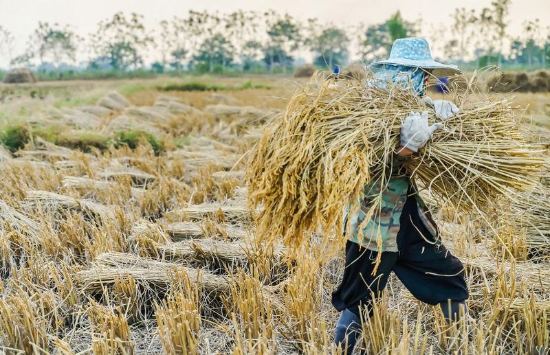 Man carrying hay bales at farm