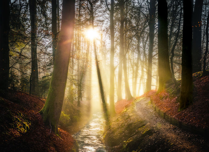 Land of fairytales Beauty In Nature Day Dreamy Fairytales Fairytales & Dreams Forest Growth Mysterious Mystical Nature No People Outdoors Scenery Scenics Streaming Sun Sunbeam Sunlight Sunset Tranquility Tree