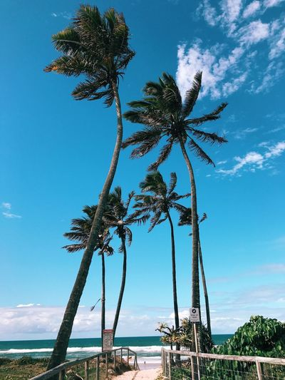 Tree Palm Tree Sea Tree Trunk Sky Blue Day Growth Scenics Beach Beauty In Nature Horizon Over Water Outdoors Nature No People Water