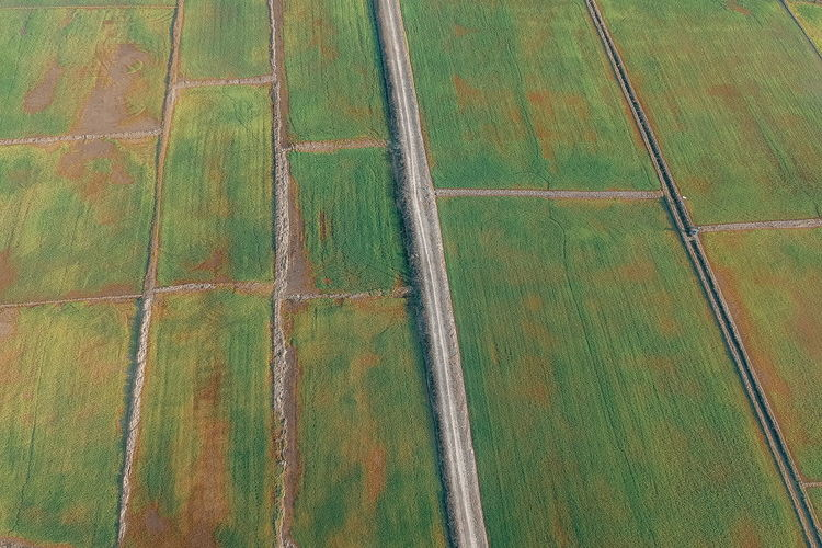 Rural Scene Field Landscape Agriculture Farm Pattern No People Full Frame Land Tranquil Scene Growth Scenics - Nature Day Environment Aerial View Tranquility Patchwork Landscape High Angle View Beauty In Nature Nature Outdoors Above Plantation