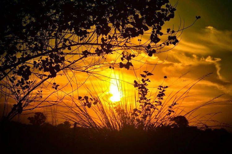 Atardecer Sunset A Walk In The Woods Summer Beautiful Sunset Everyday Joy