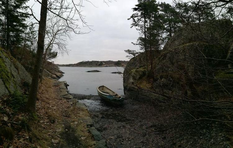 Tree Water Nautical Vessel Sky