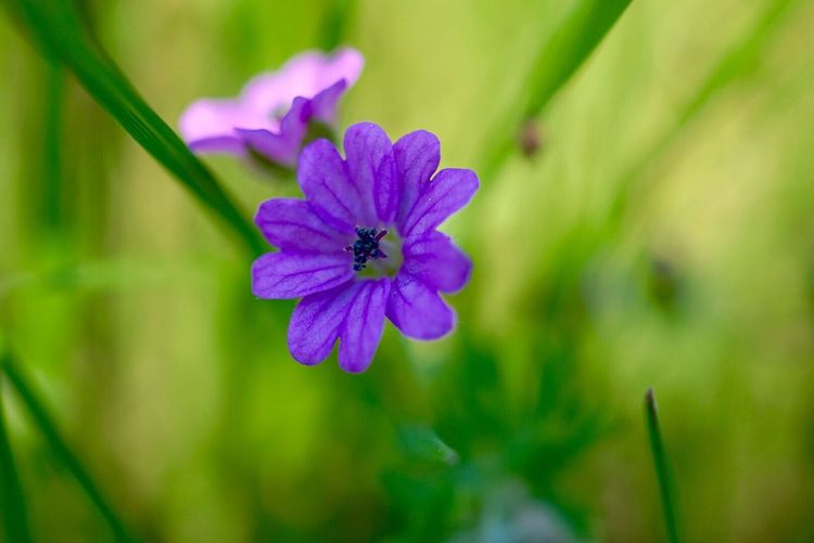 Purple Flowers Flower Nature_perfection Nature_collection Nature Photography Showcase May Beautiful Nature Naturelovers Nature On Your Doorstep Photography Natural Beauty New Life Light And Shadow Taking Photos Enjoying Life Shadow Photooftheday Purple