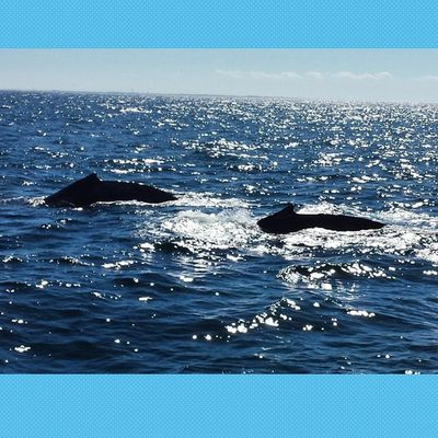 Whales!!!! WhaleWhatch Shepic2014