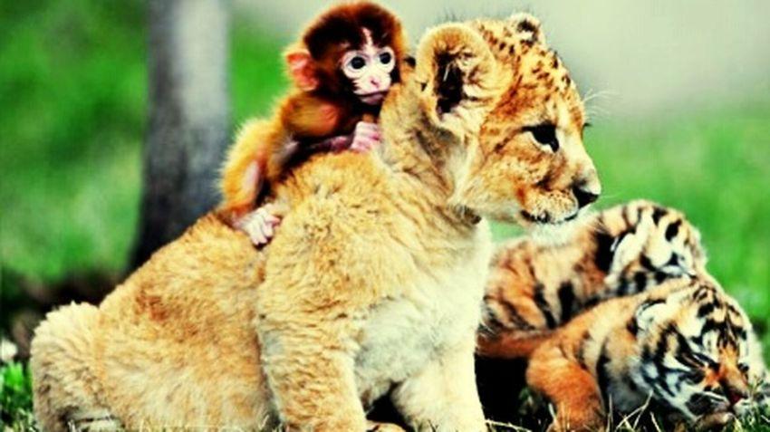 Freundschaft Tiere♡ Süß! Putzig Ein Herz Für Tiere Der König Der Tiere Süßi❤️