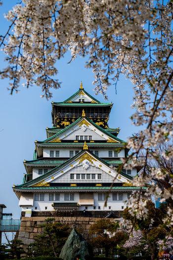 Osaka Castle OSAKA Castle Achitecture Sakura Blossom Historic Palace Ancient Ancient Civilization History Past Archaeology Civilization