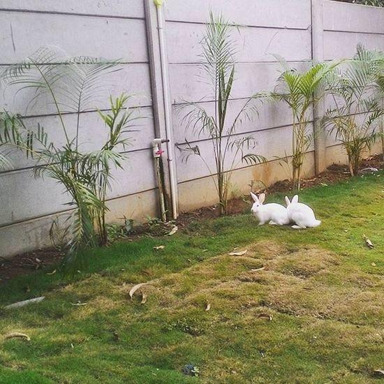 Rabbit Outings  Randomclick Cuteanimals