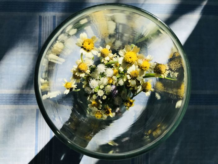 Close-up of flowers in glass vase on table