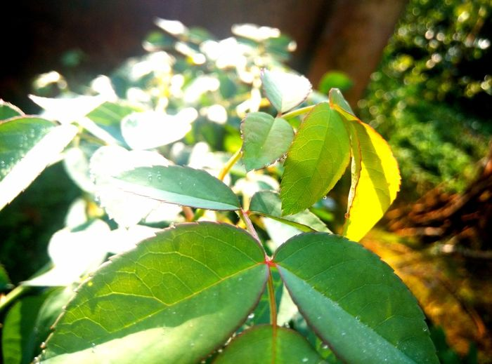 EyeEmNewHere Animal Themes Beauty In Nature Close-up Day Fragility Freshness Green Color Growth Leaf Nature No People Outdoors Plant Tree