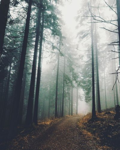 Trees In Forest