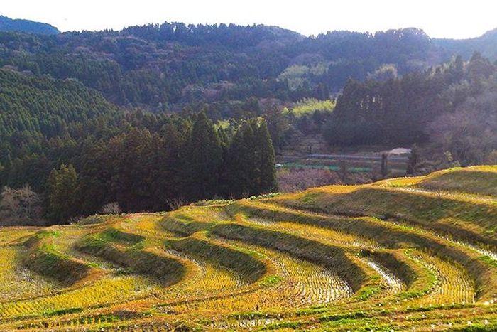 来年もよろしくお願いします。あと2か月頑張りたい。田 千枚田 Ricefield RiceTerraces Japan