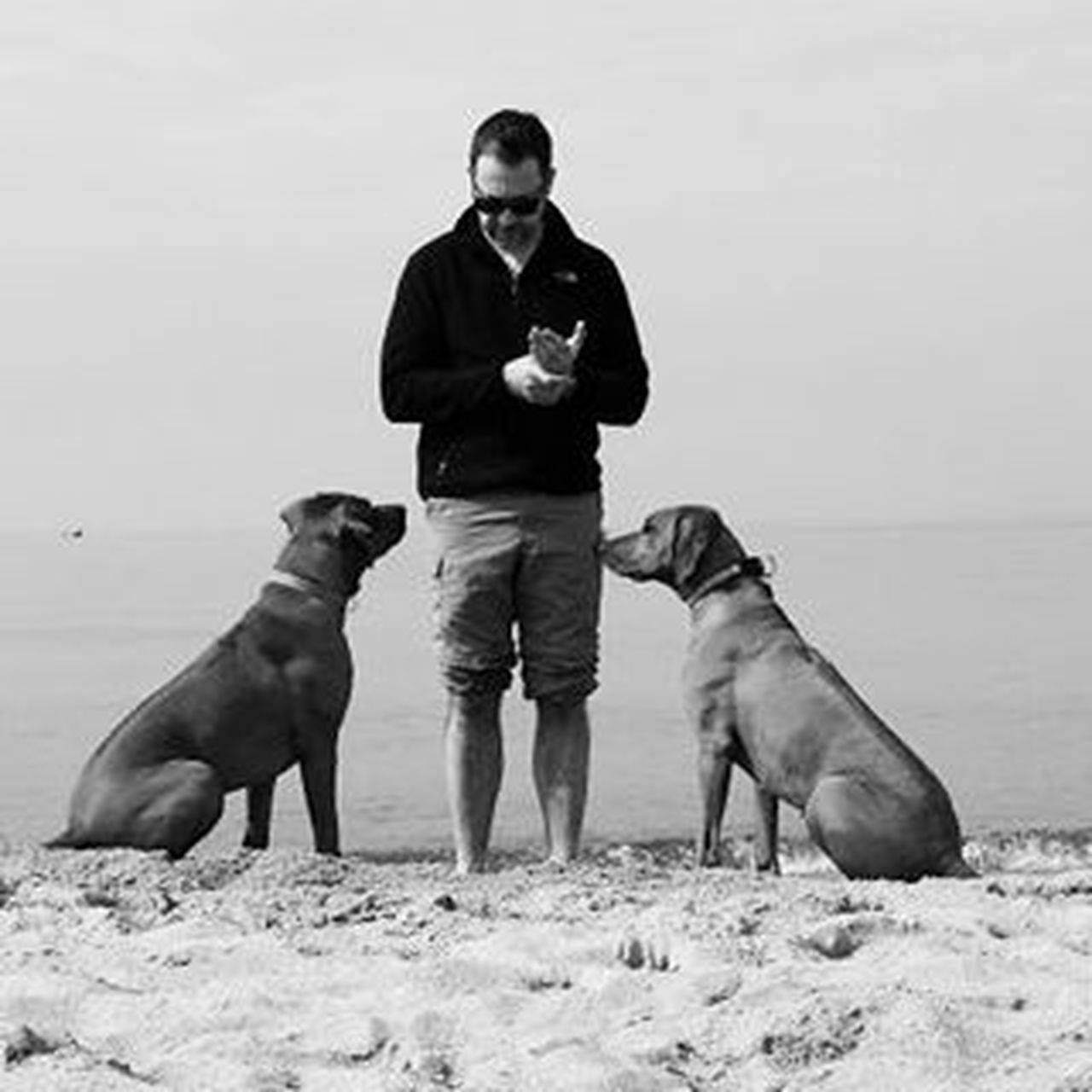 dog, one man only, only men, pets, one person, domestic animals, one animal, adult, full length, adults only, men, mammal, people, friendship, outdoors, sand, day, nature