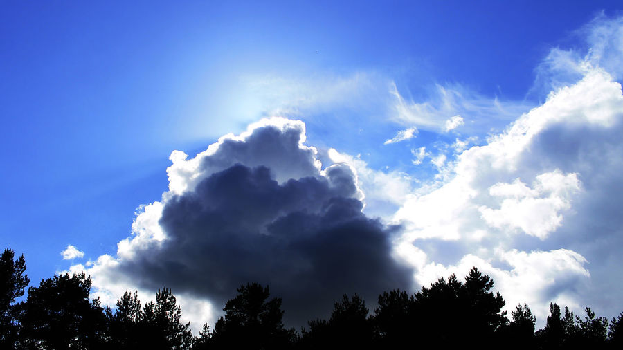 Beauty In Nature Blue Cloud Cloud - Sky Cloudscape Cloudy Day Growth High Section Idyllic Low Angle View Majestic Nature No People Non-urban Scene Outdoors Overcast Scenics Sky Sunbeam Tranquil Scene Tranquility Tree Treetop Weather