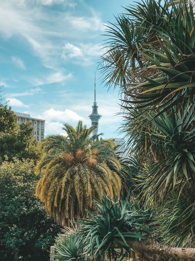 Auckland tower Plant Tree Sky Growth Palm Tree Nature Tropical Climate No People Day Built Structure Cloud - Sky Architecture Building Exterior Low Angle View Outdoors Travel Destinations Leaf Green Color Date Palm Tree Travel Palm Leaf Spire  Sky Tower Sky Tower Auckland Auckland New Zealand
