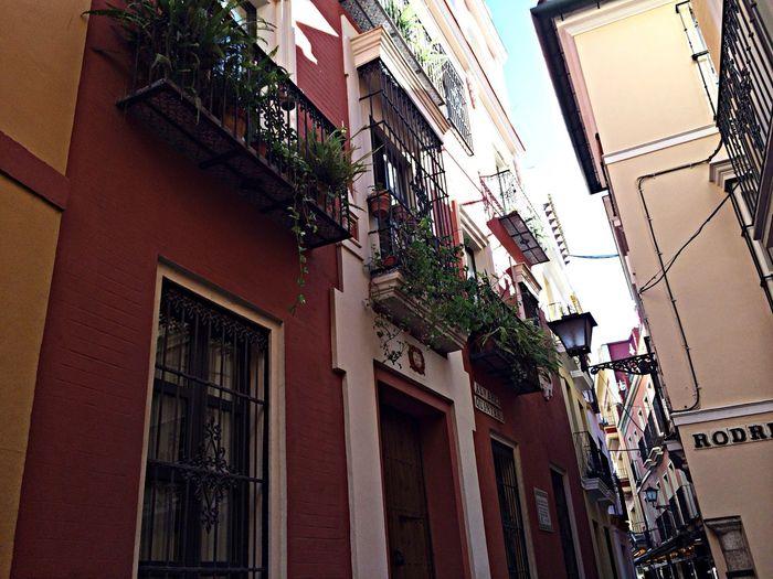 Amazing Sevilla love España everyone should go here ??