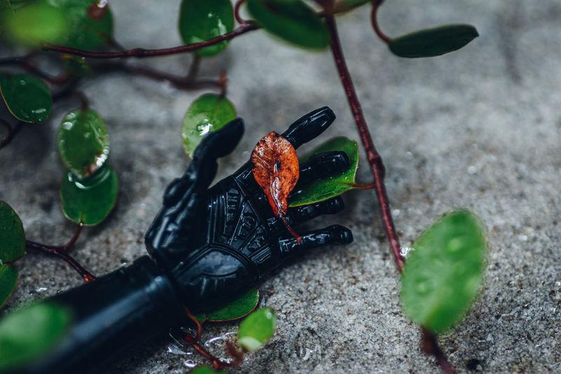 Robot holding dead leaf
