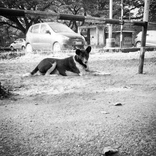 DogsOfInsagram DogsofBangalore Nammabengaluru