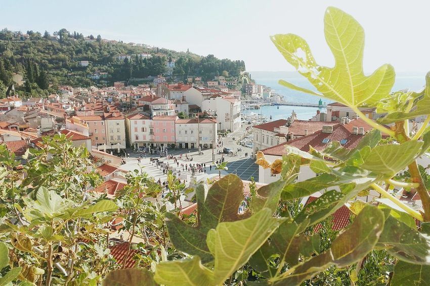 ~Piran Colorful Architecture Photography Seaside Happiness Happy Soft Piran Piran Slovenia 2017 Landscape Beautiful Trough The Trees City Cityscape Colors Slovenia Slovakia Plant Growth Nature Day Outdoors Leaf Beauty In Nature Freshness EyeEmNewHere