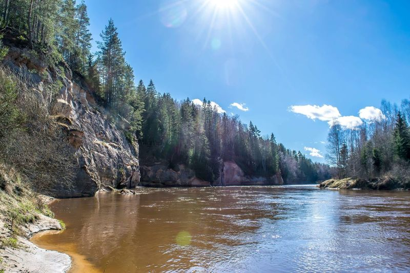 Gauja cliffs Gauja Cliff River River Water Tree Sunlight Plant Sunbeam Sky Nature Day Lens Flare Sun Sunny Reflection No People Beauty In Nature Scenics - Nature Outdoors Growth Adventures In The City