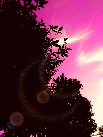 Tree Sky No
