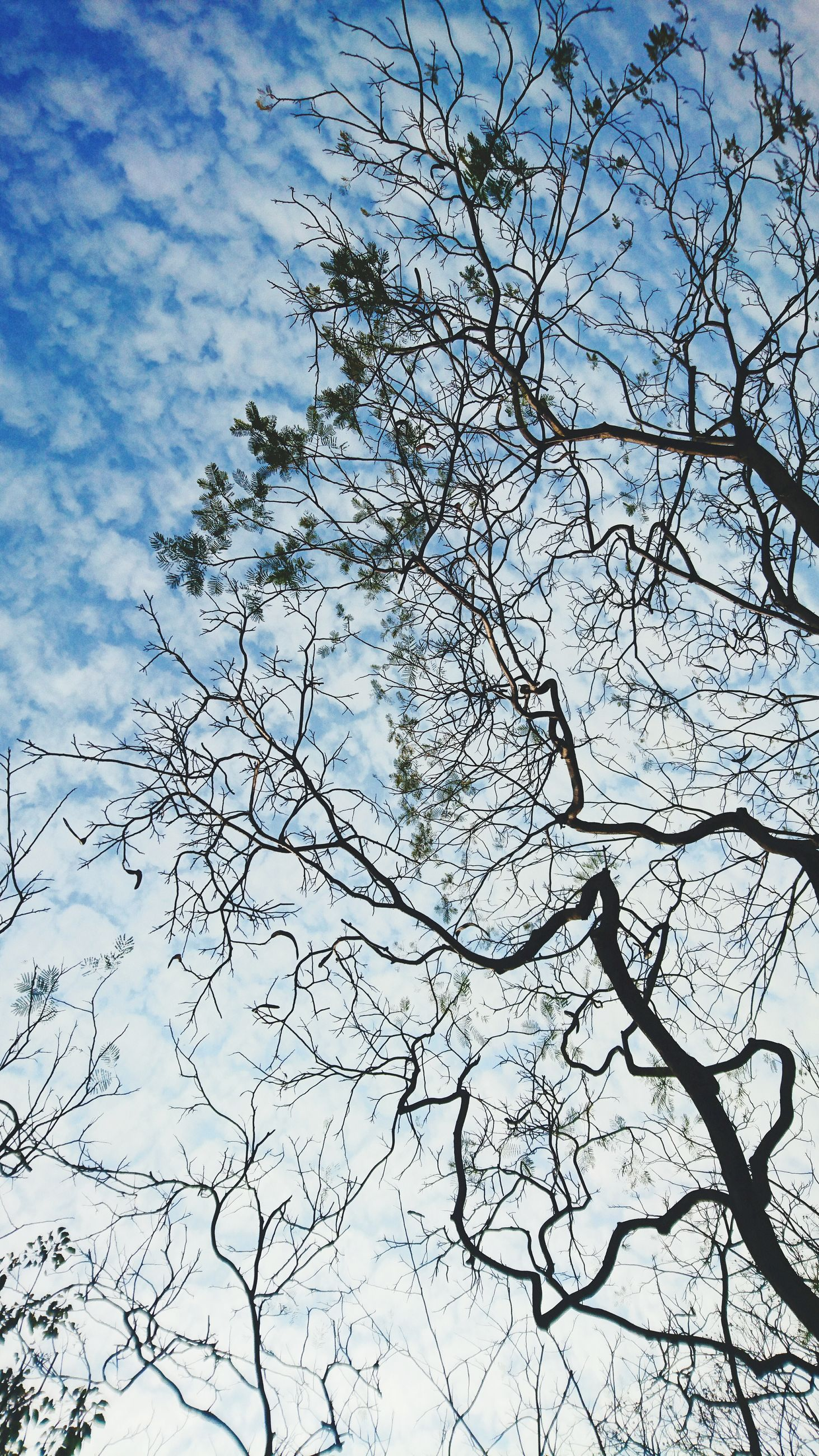 branch, bare tree, low angle view, tree, sky, nature, tranquility, beauty in nature, scenics, cloud - sky, outdoors, blue, growth, no people, day, cloud, tranquil scene, silhouette, high section, backgrounds